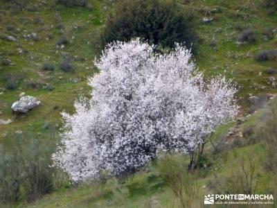 Cebreros - La Merina, Atalaya de ensueño - cerezo en flor;viajes de lujo
